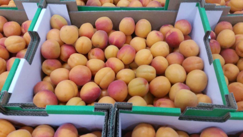 Fruits à noyaux !
