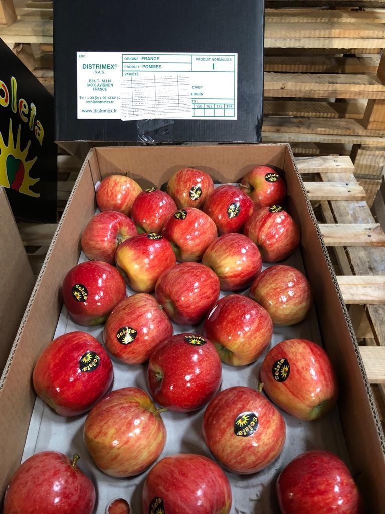 Nueva temporada de manzana
